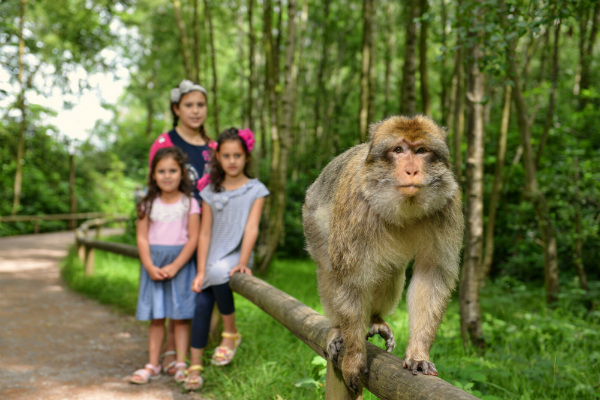 Trentham Monkey Forest Family Fun
